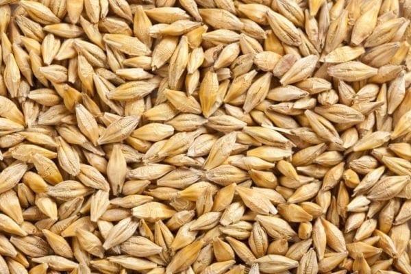 Hasil gambar untuk Barley 600x400